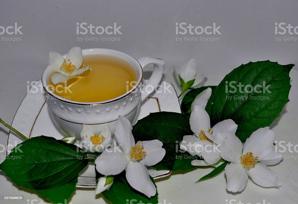 Green tea with jasmine in cup stock photo