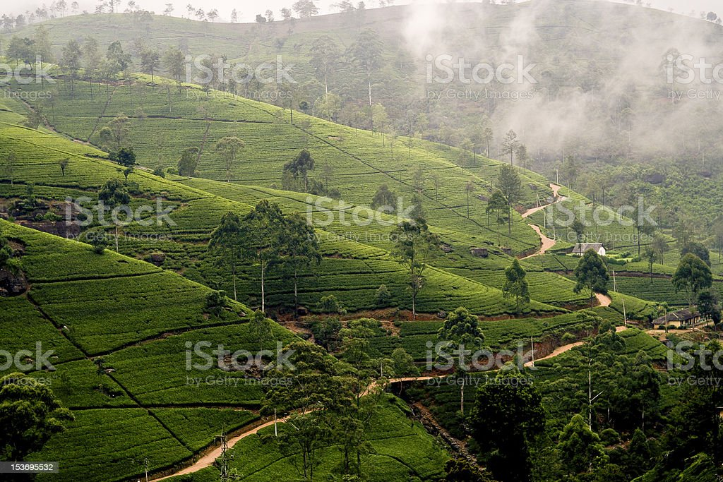 green tee terrasses in the highland from Sri Lanka royalty-free stock photo