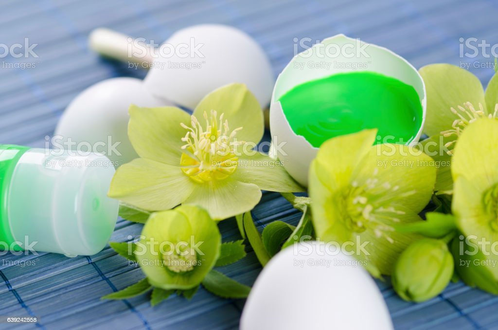 Green tempera paint tube and hellebore and egg shells in stock photo