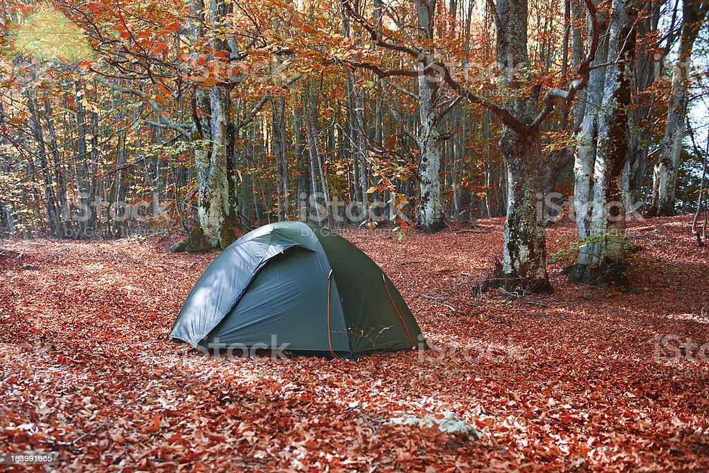 Green tent in the forest royalty-free stock photo