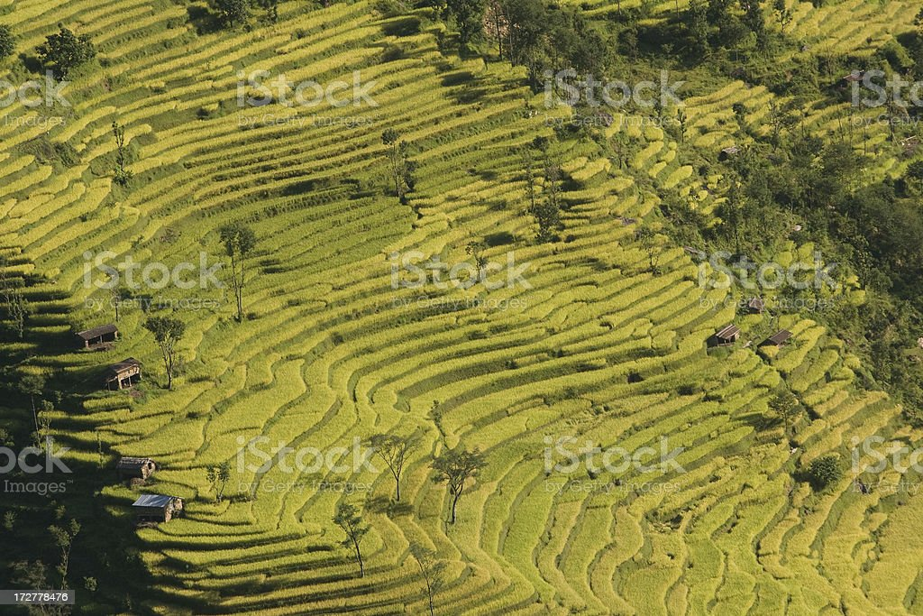 Green, terraced hill in Nepal royalty-free stock photo