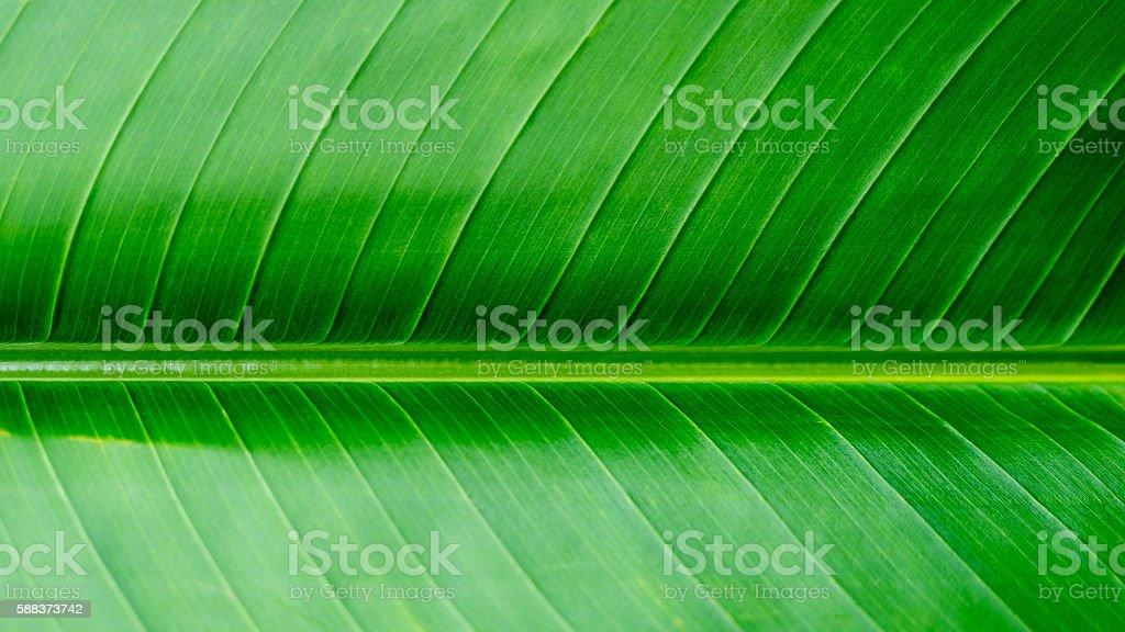 Grüne Textur Hintergrund Lizenzfreies stock-foto