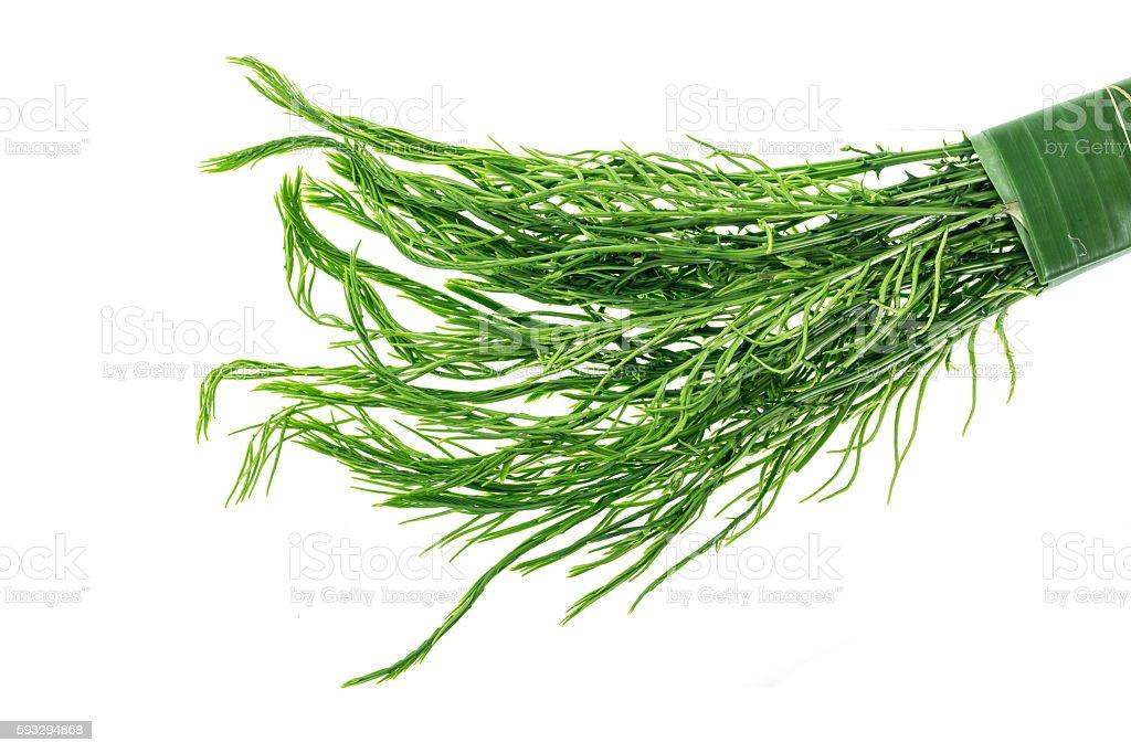 Green Thai Senegalia pennata isolated on white background stock photo
