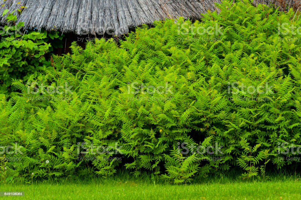 green thickets stock photo