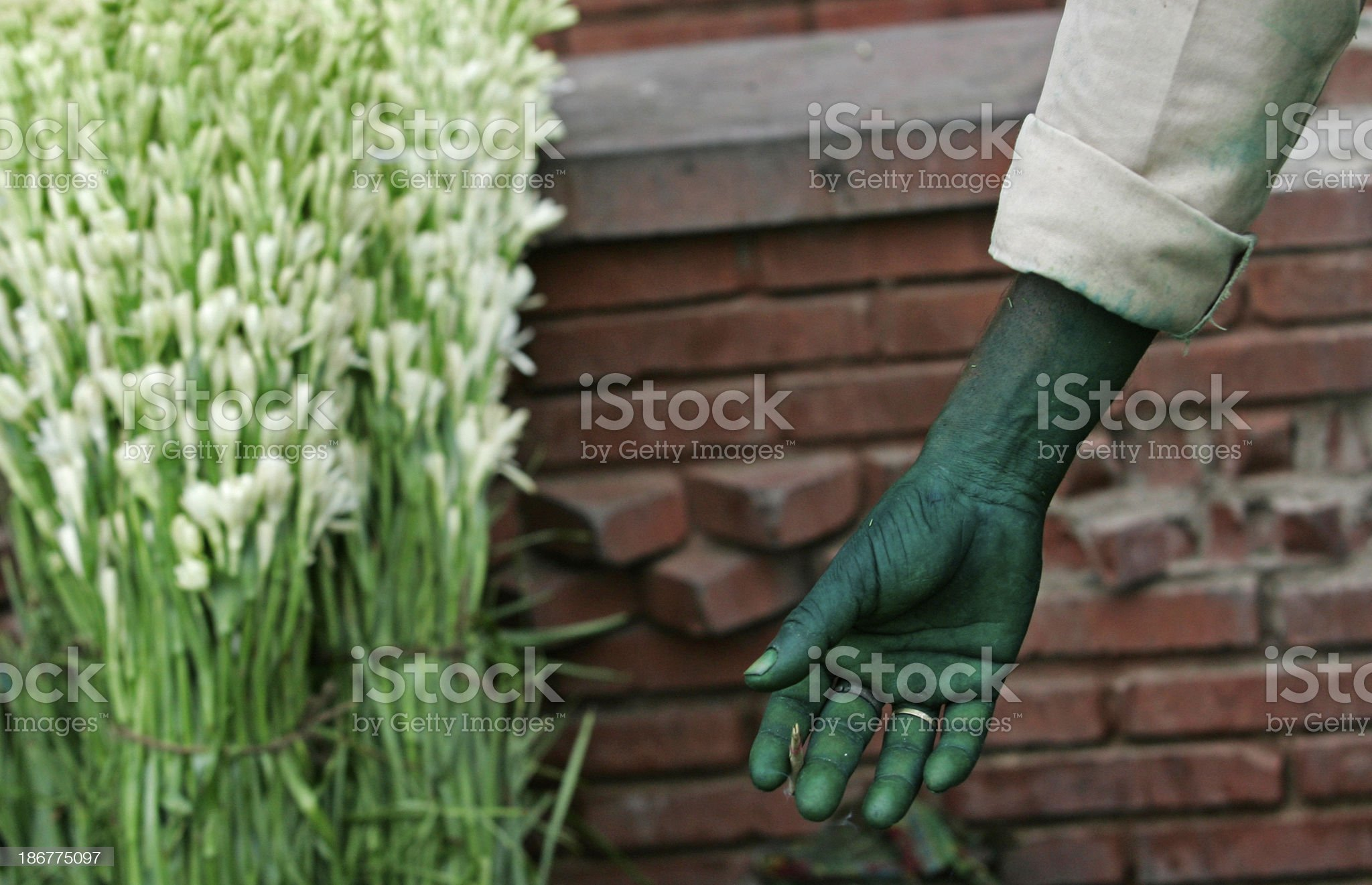 Green Thumb royalty-free stock photo