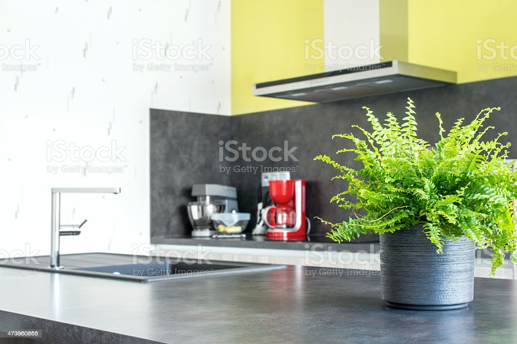 Green tiger fern plant pot placed in modern kitchen stock photo