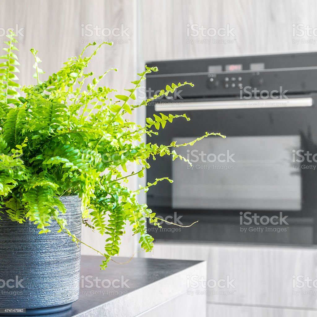 Green tiger plant in a pot on a kitchen counter by an oven stock photo