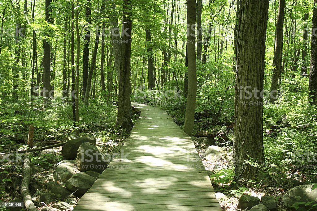 Green tinted photo of a wooden footbridge through a forest stock photo