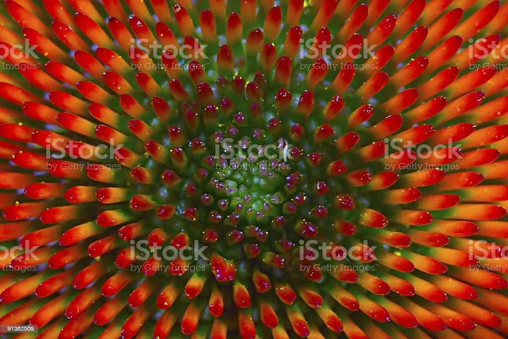 green to orange nobs stock photo