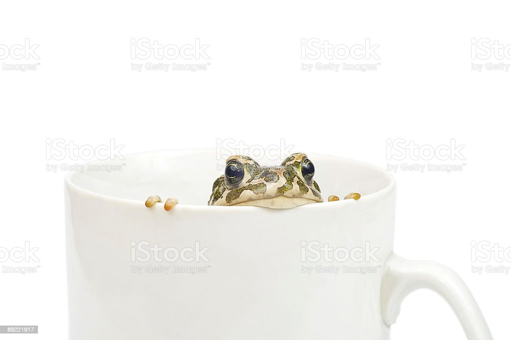 Green toad royalty-free stock photo