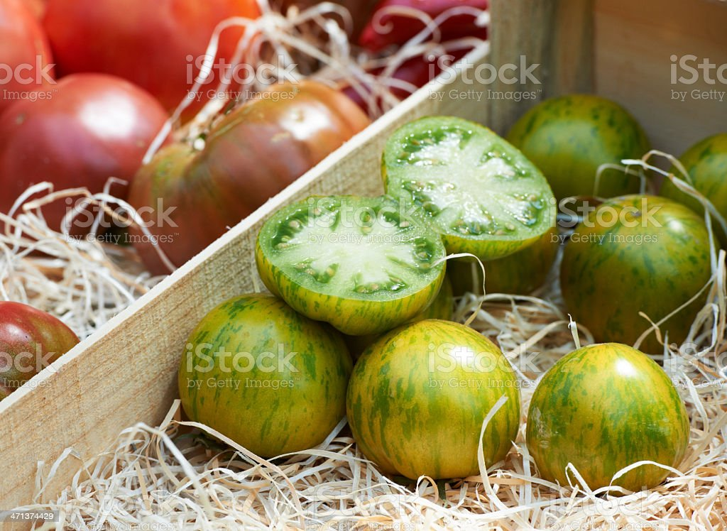 Green tomato variety from Provence stock photo