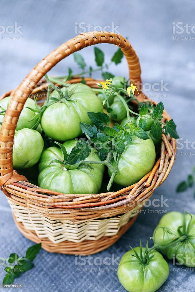 green tomatoes in basket stock photo