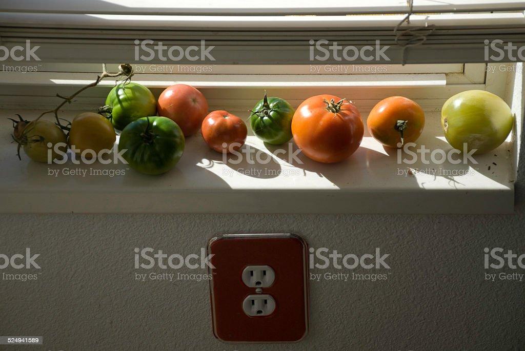 Tomate Verde maturação em Sunny Peitoril de Janela foto de stock royalty-free