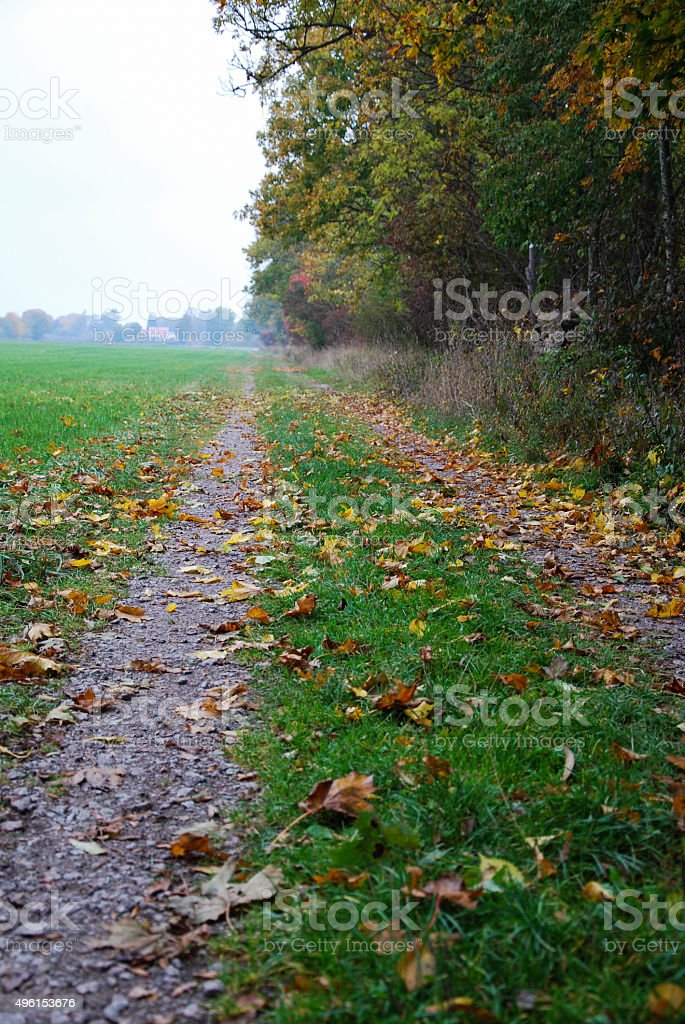 Green tracks with colorful leaves stock photo