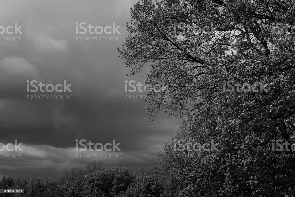 Green Tree and Storm Clouds stock photo