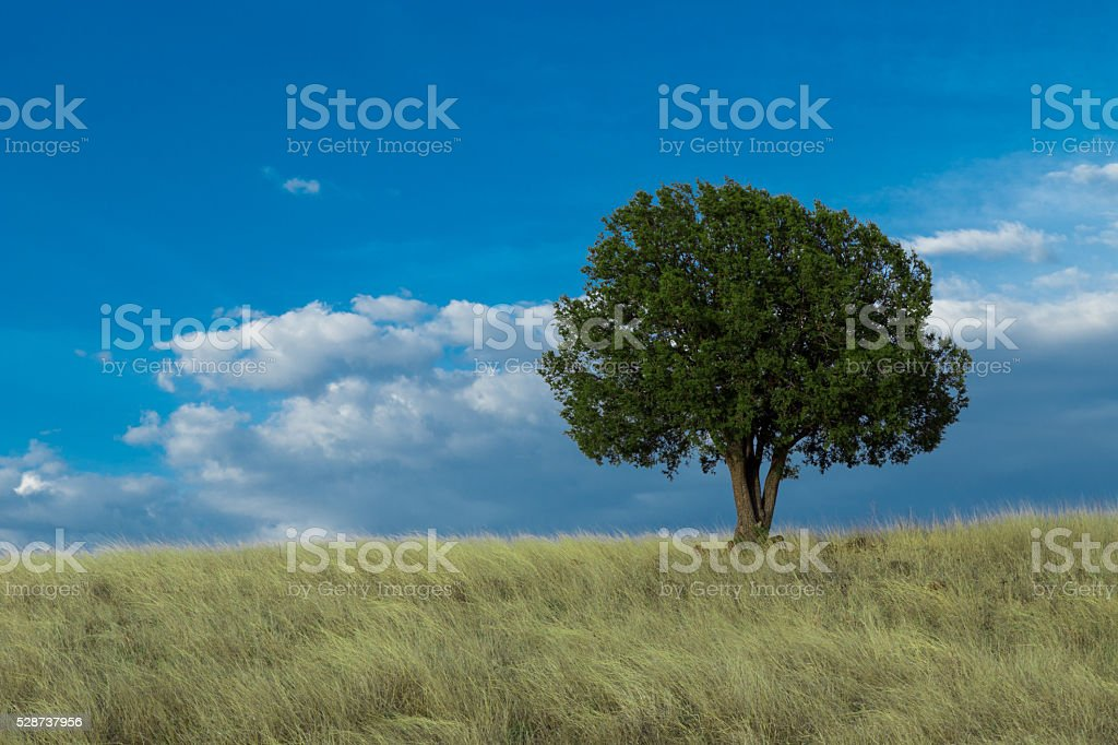 Green Tree Blue Sky Clouds tall grass isolated stock photo