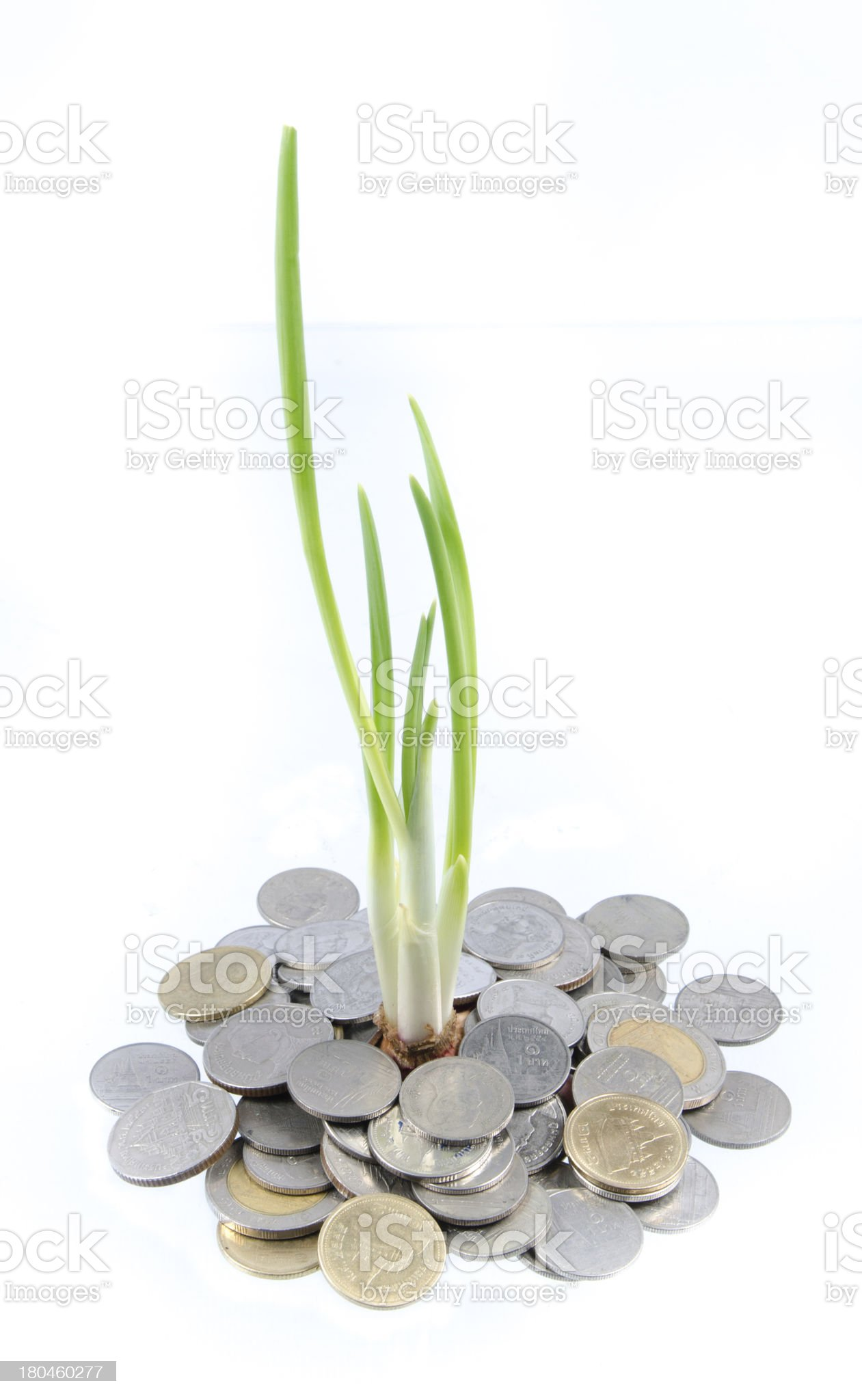 Green tree growing on money coins royalty-free stock photo
