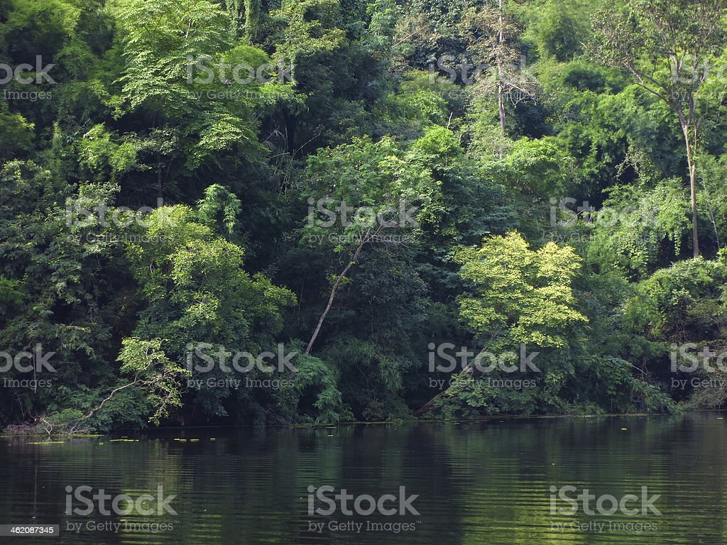 green tree in  forest and river stock photo