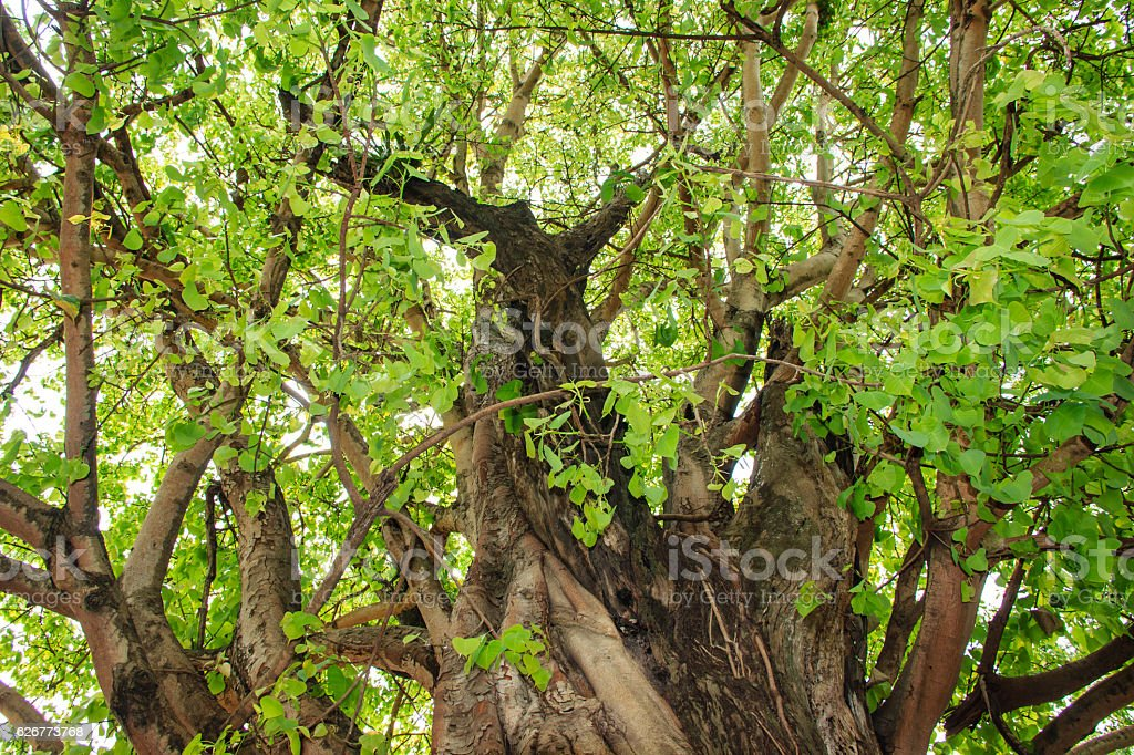 Green tree in forest stock photo