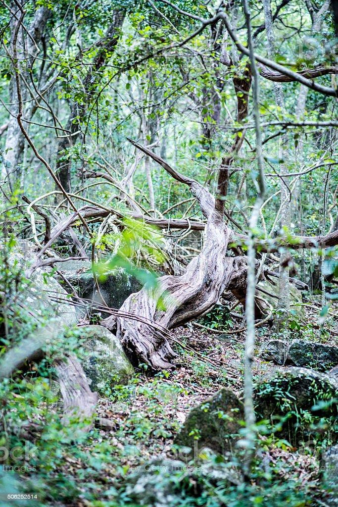 Green tree in rainforest stock photo