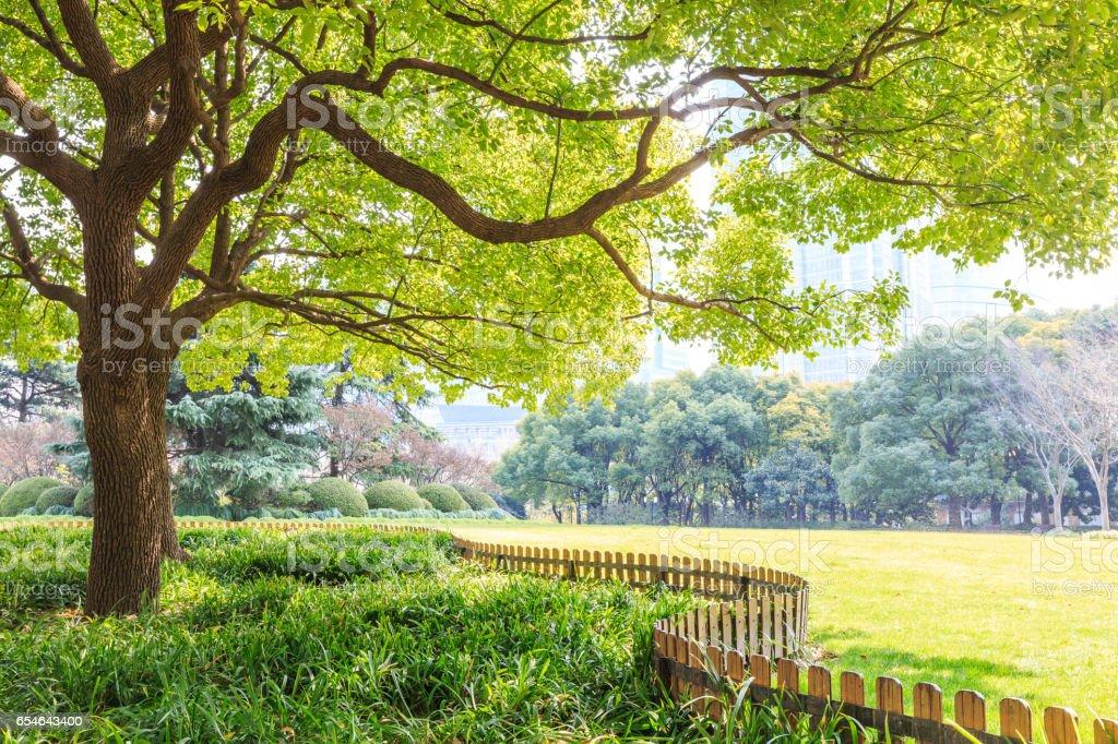 Green tree in Shanghai City Park stock photo