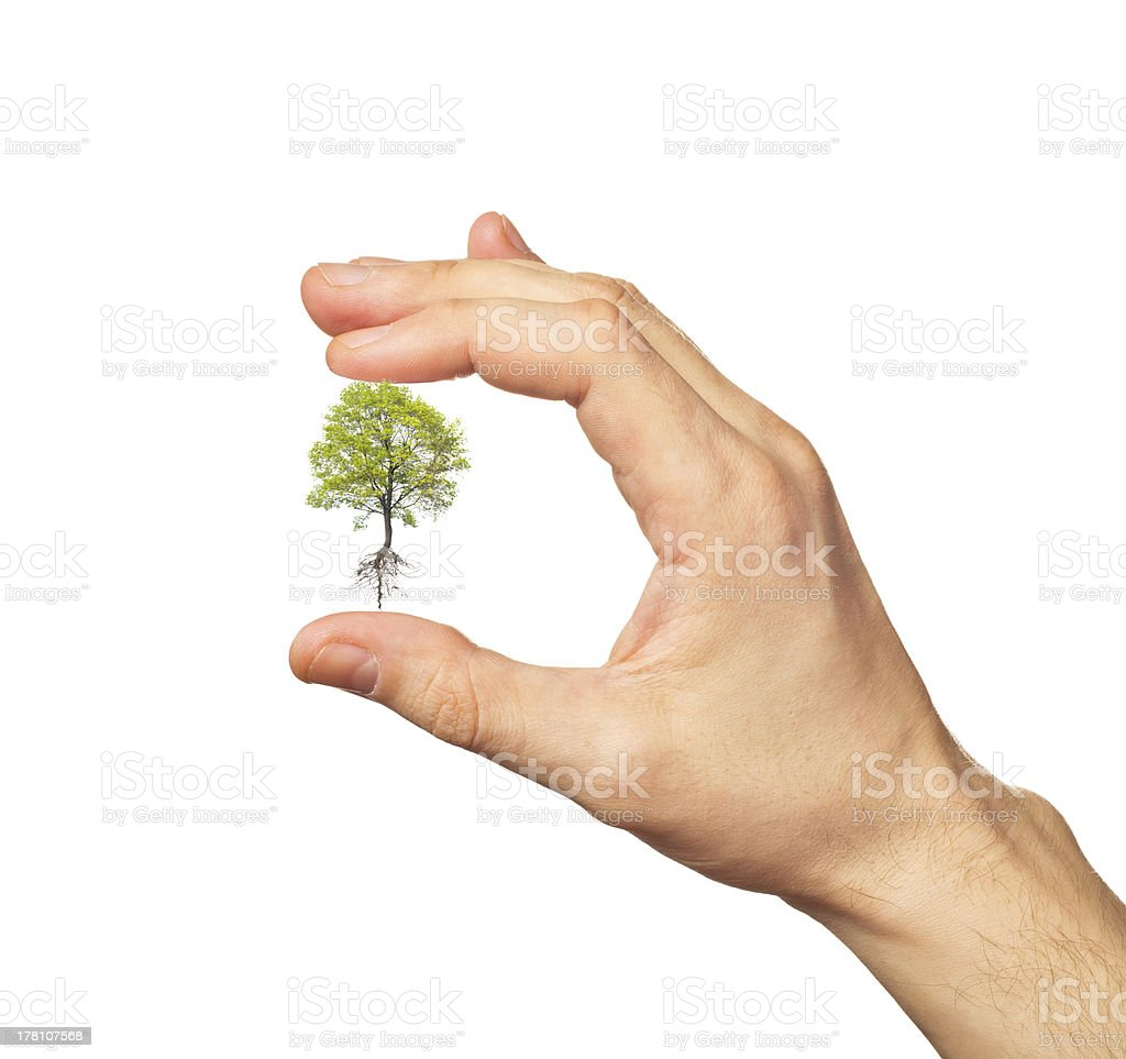 Green tree in the hand on white royalty-free stock photo