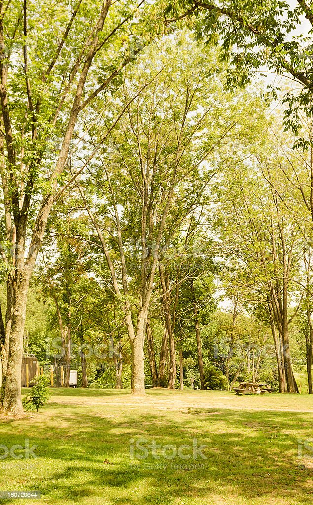 Green tree in the nature royalty-free stock photo