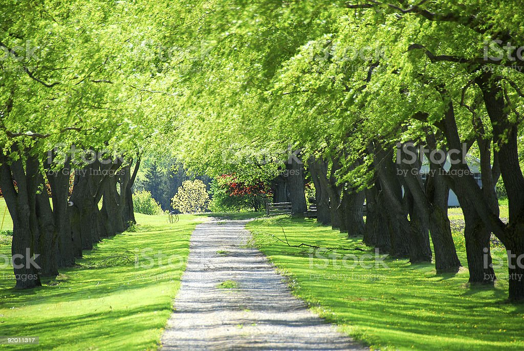 Green tree lane royalty-free stock photo