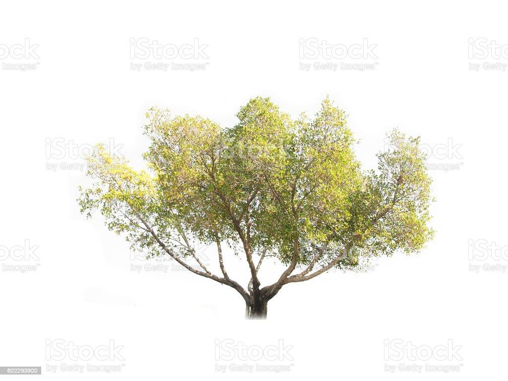 Green tree leaves stock photo