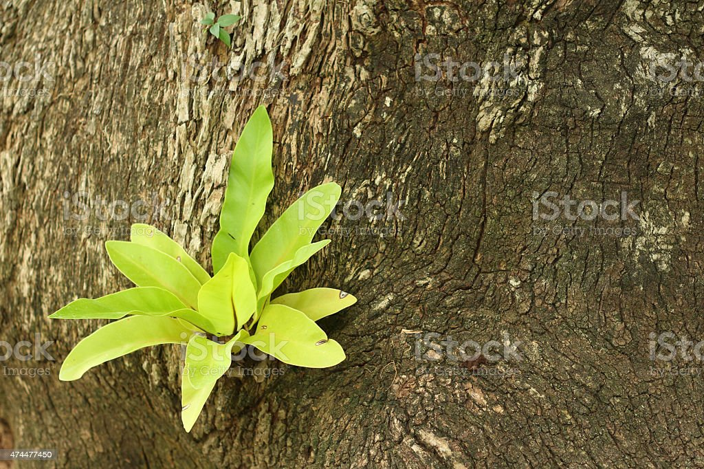 Green tree natural occurring. stock photo