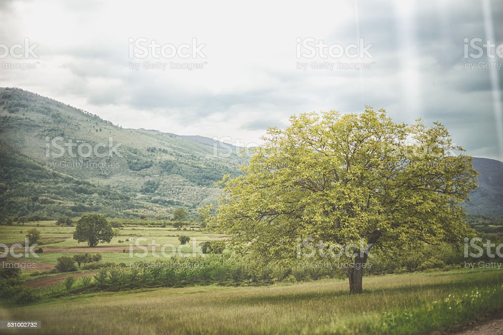 Green tree nature landscape on cloud and blue sky background stock photo