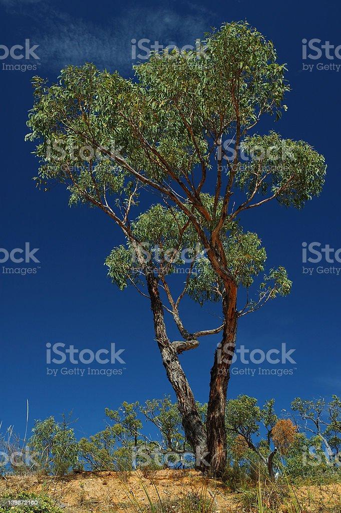 Green tree on a blue sky royalty-free stock photo