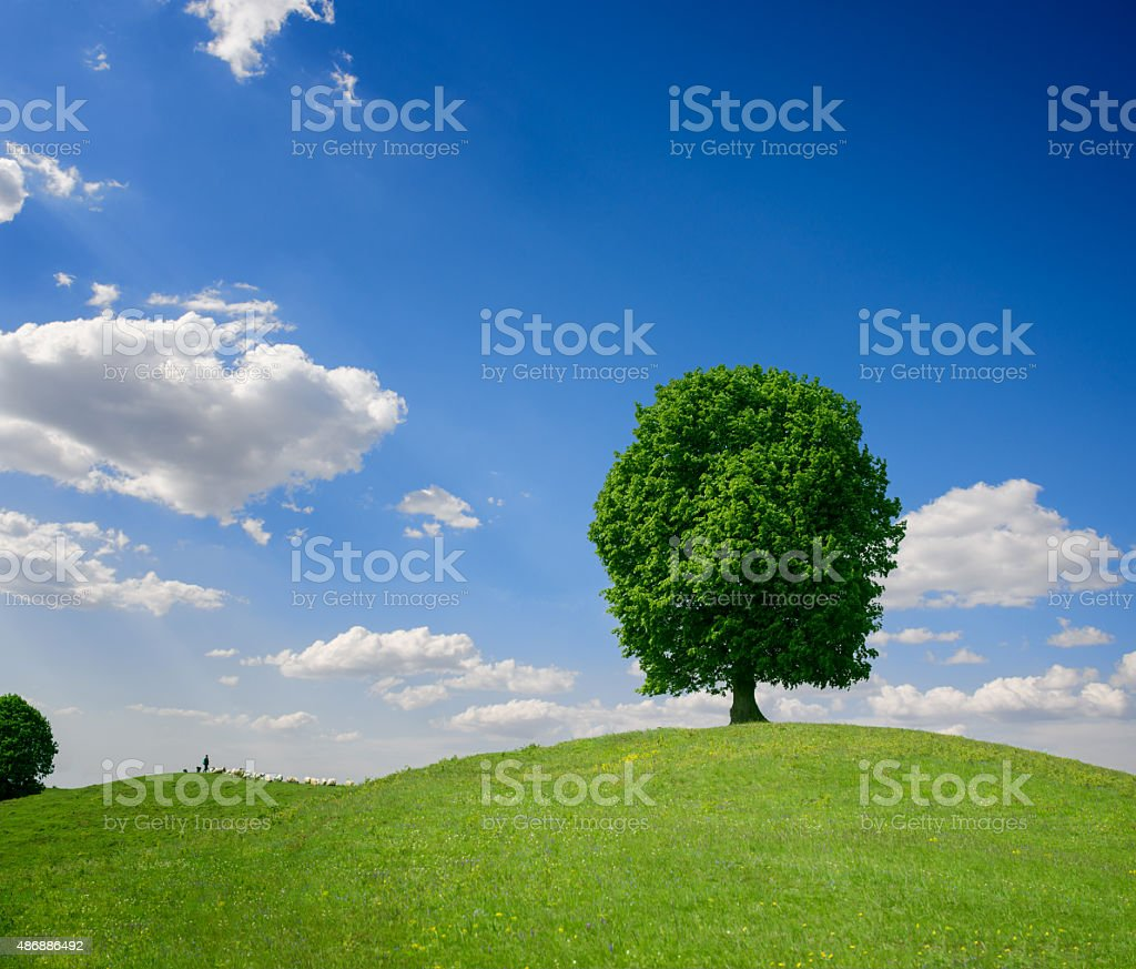 green tree on a hill stock photo