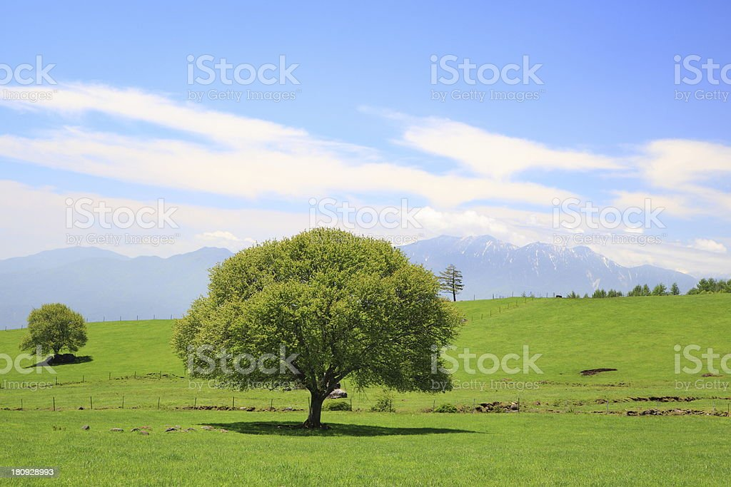 Green tree on a meadow royalty-free stock photo