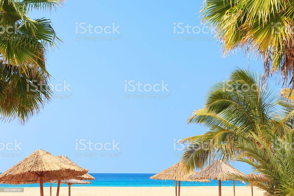 Green tree on a white sand beach- Cape Verde stock photo
