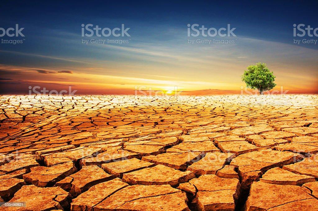 Green tree on cracked desert landscape stock photo