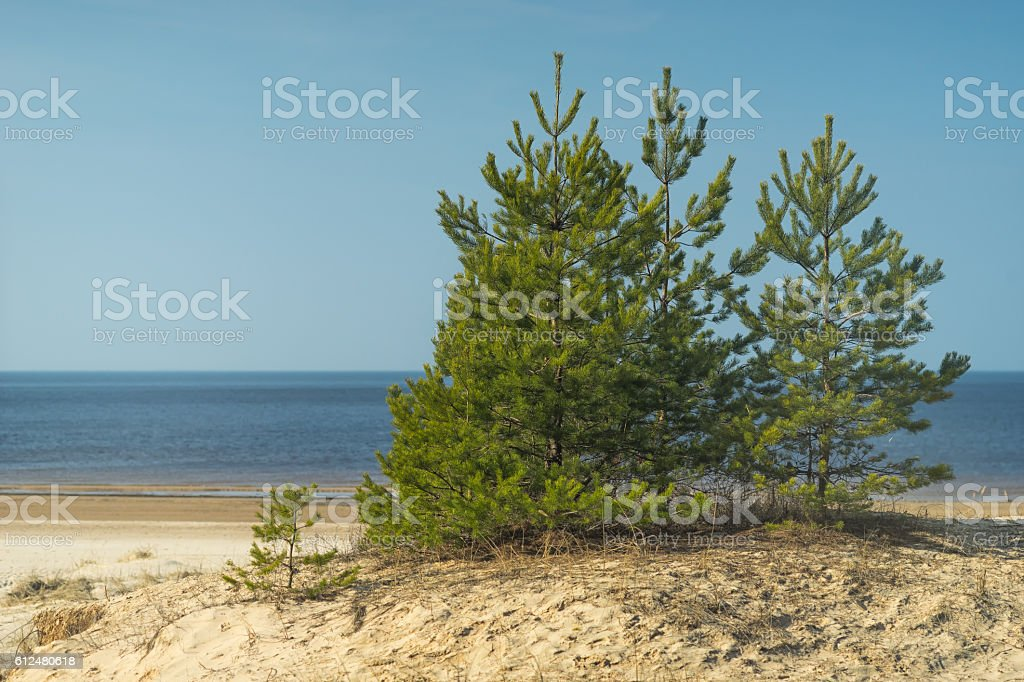Green tree on the beach in spring stock photo