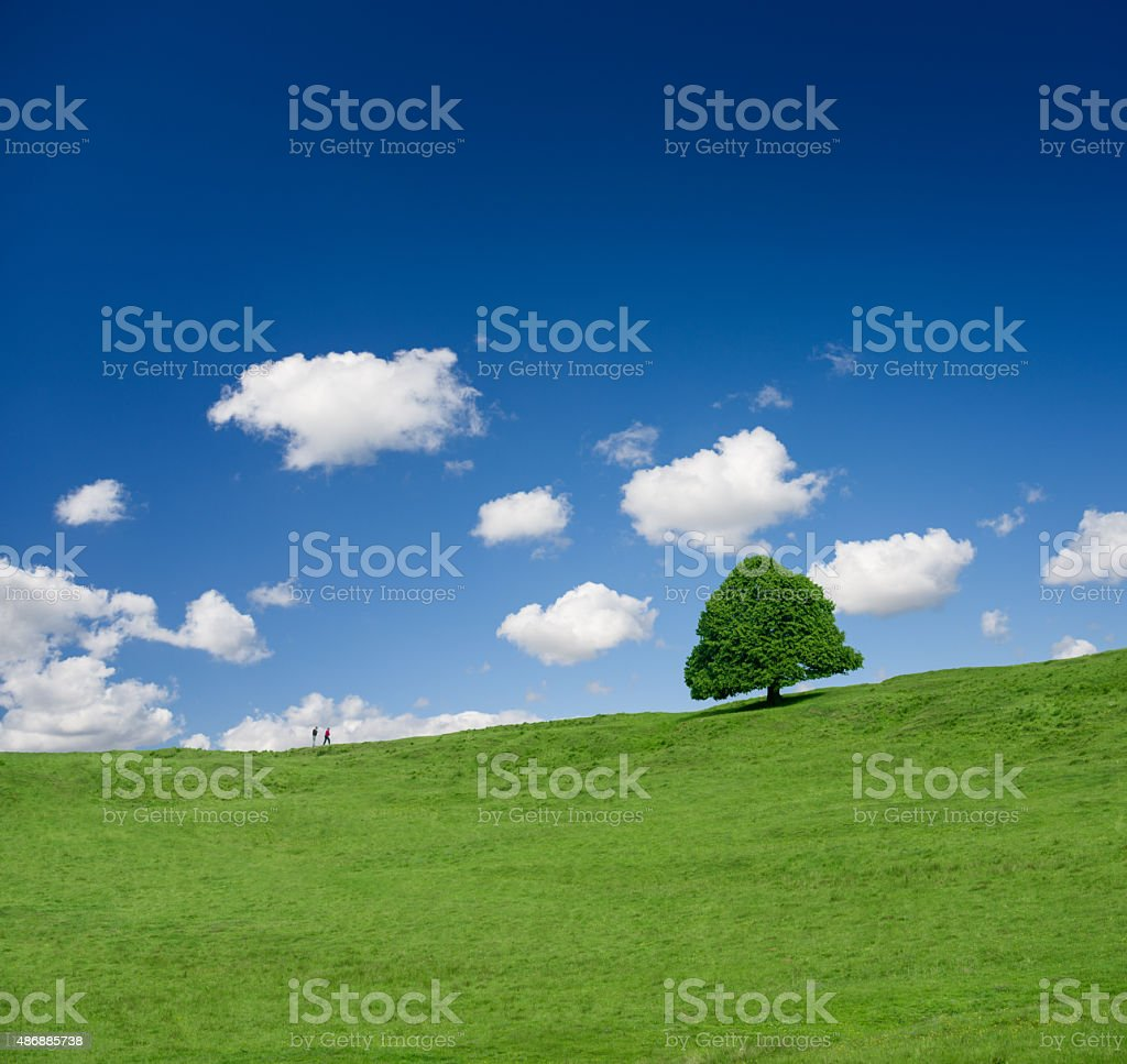 green tree on the field stock photo