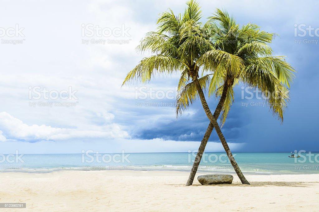 Green tree on white sand beach stock photo