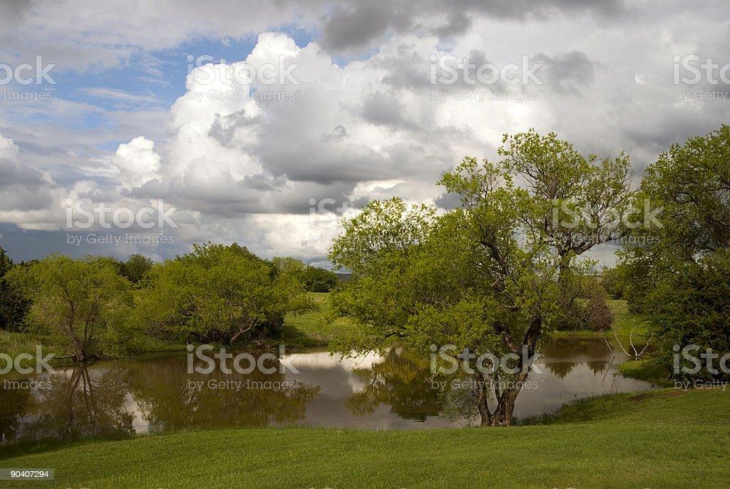 Green Tree Lizenzfreies stock-foto