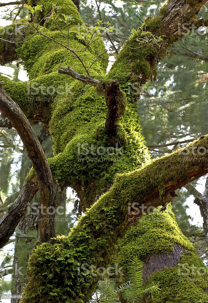 Green Tree Sculpture royalty-free stock photo