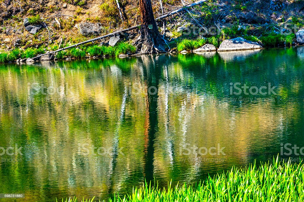 Green Tree Summer Water Reflection Abstract Wenatchee River Washington stock photo