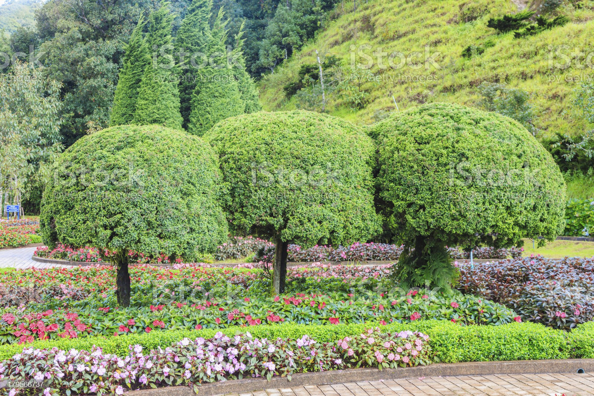 green tree with  beautiful flower royalty-free stock photo