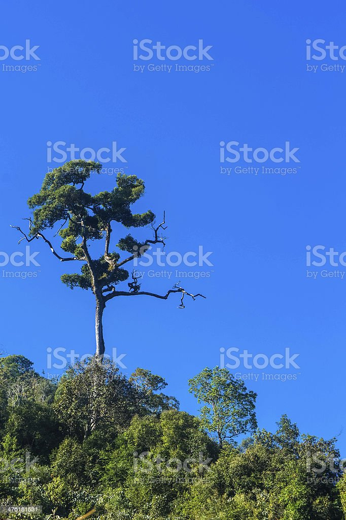 Green tree with blue sky royalty-free stock photo