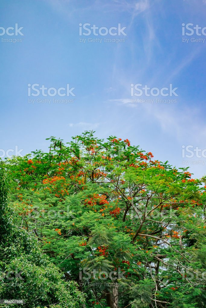 Green tree with blue sky stock photo