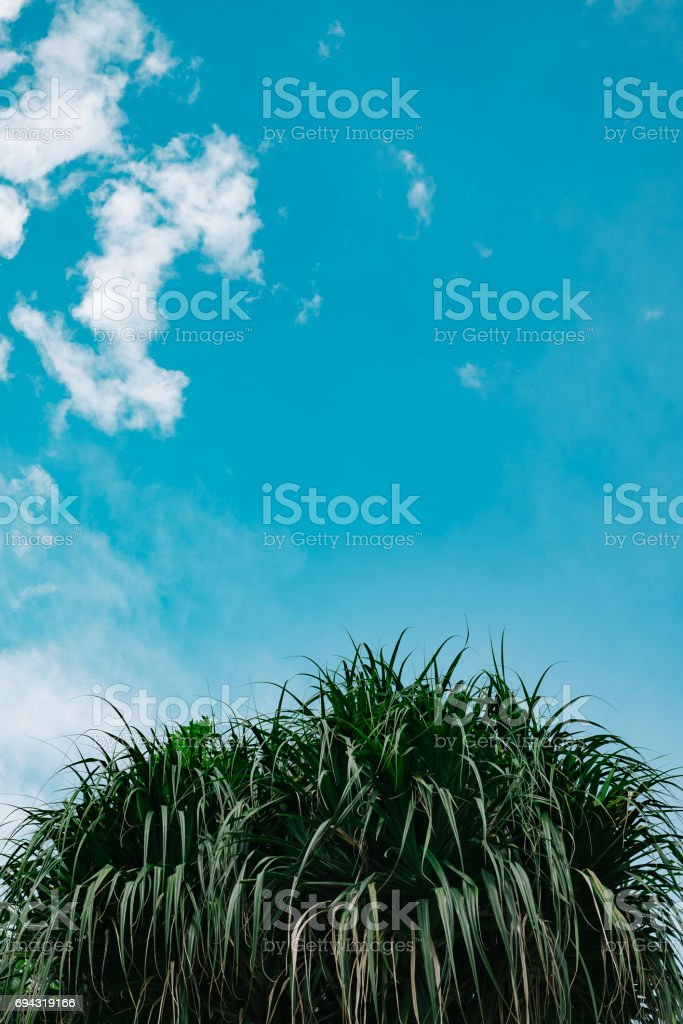 Green tree with clear blue sky stock photo