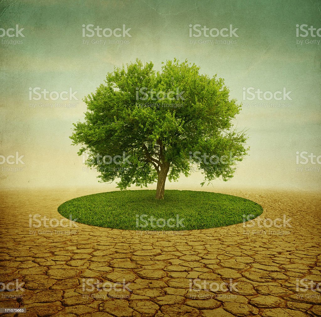 green tree with grass in desert stock photo