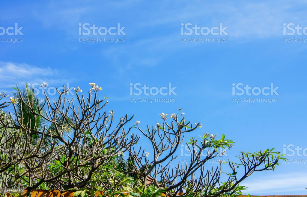 Green trees and blue sky. stock photo