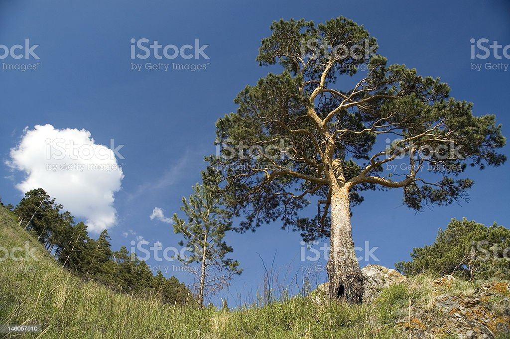 Green trees and cloudy sky. royalty-free stock photo