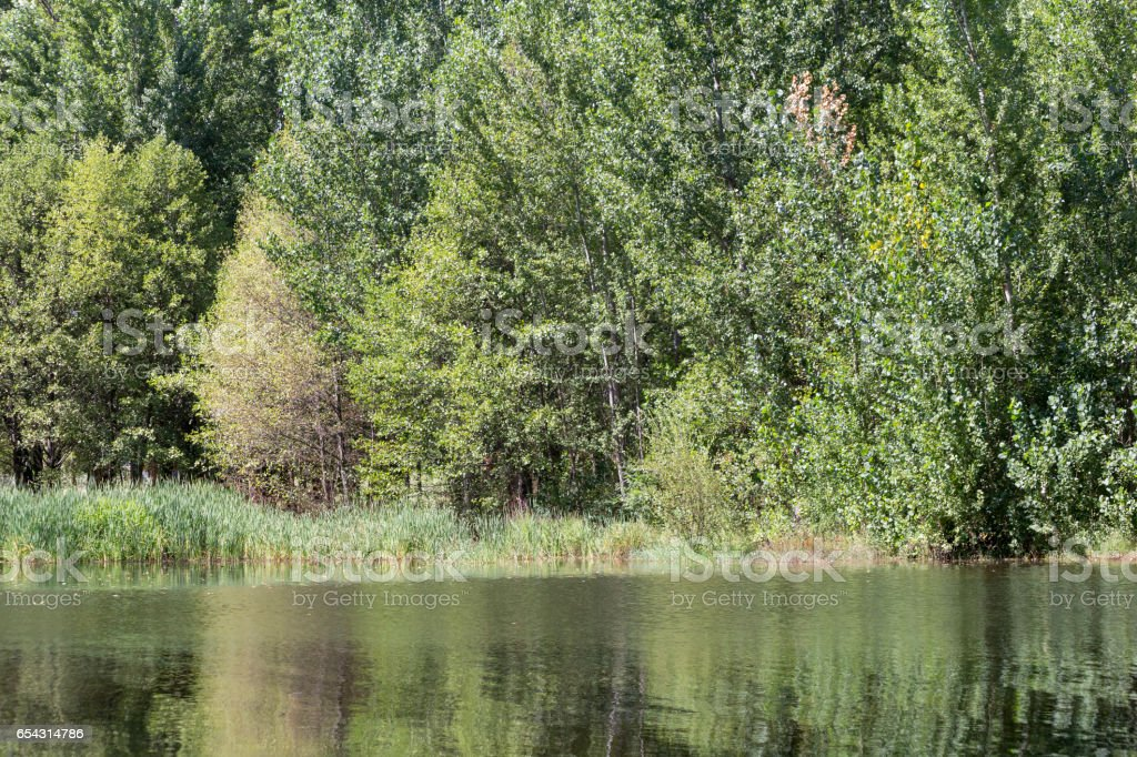 Green trees at the water's edge stock photo